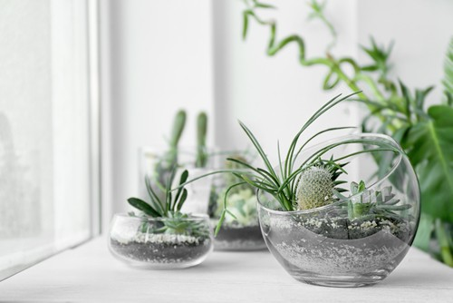 Is It Good to Have Plants in Home?